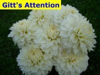 Gitt\'s Attention