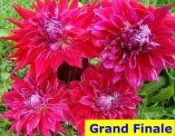 GrandFinale