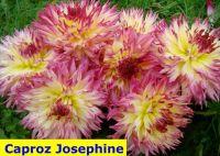 Caproz Josephine